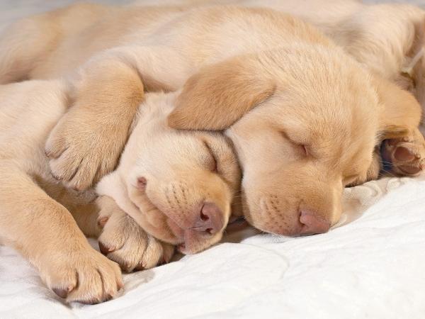 sleepingpuppyspooning