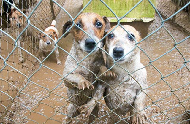 puppy mills 2