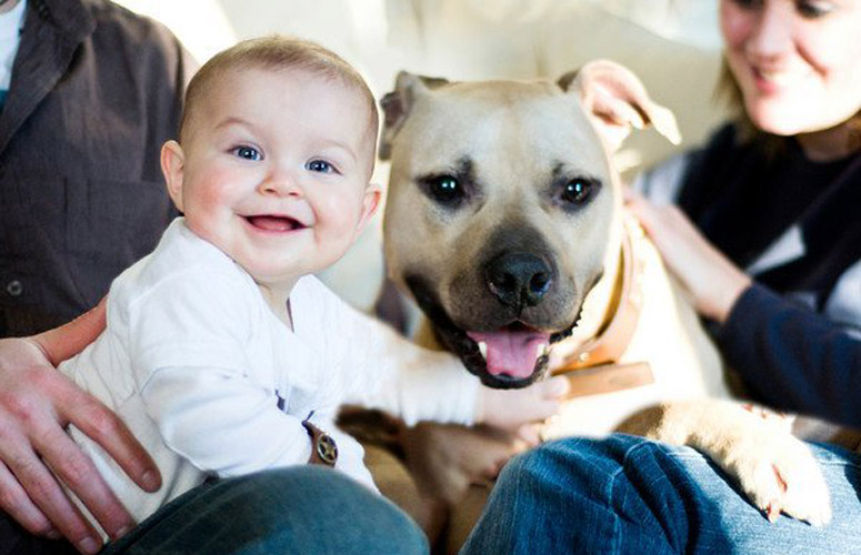 These Were Michael Vicks Fighting Dogs Where They Are Now Is - Cute portraits baby and rescue dog