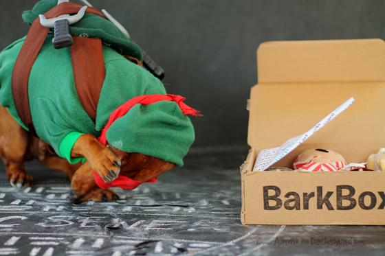 ammo barkbox