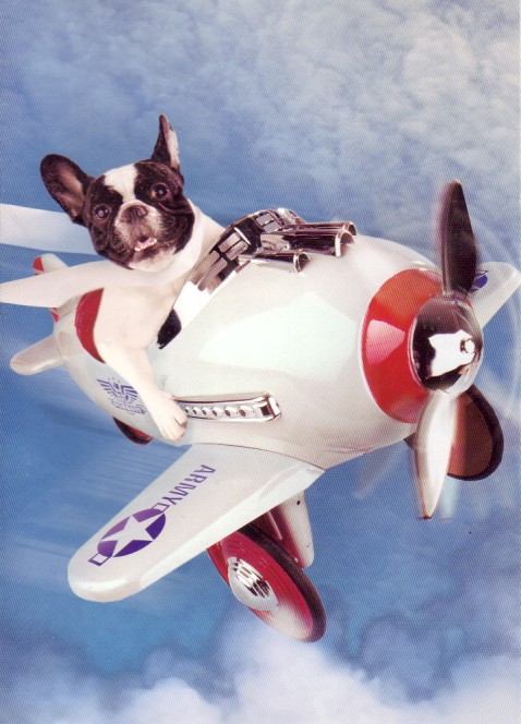 Can You Fly A Dog On A Plane