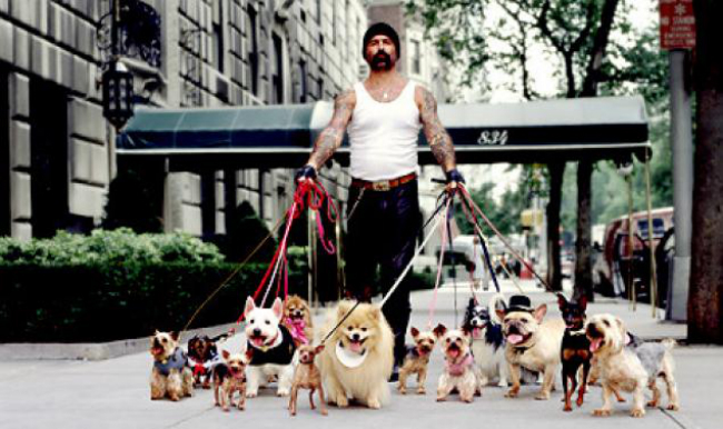 Confessions of a Dog Walker