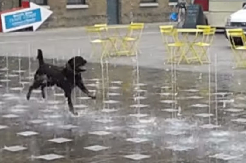 Deliriously Happy Pup Dances Around in Water Fountain