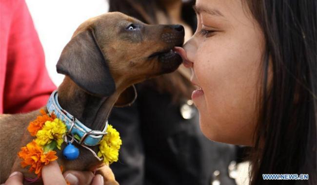 diwali-1-dog-1383551686108_950