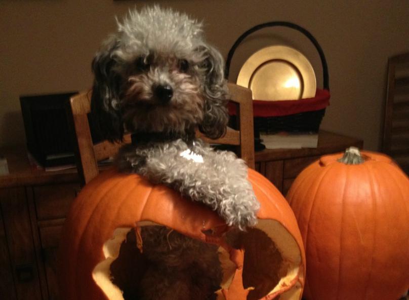 halloween-featt-dog-shame41