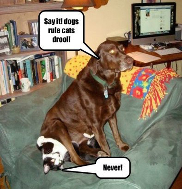 Image via Dogs Rule, Cats Drool