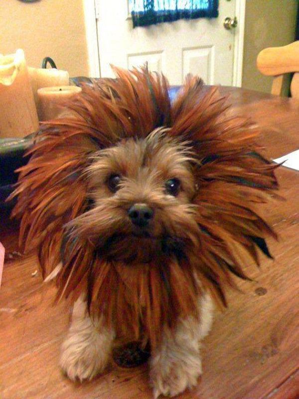 yorkie with floppy ears dog breeds picture