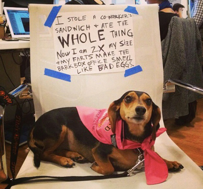 23 Reasons Why Doxies Remain The Undisputed Rulers Of