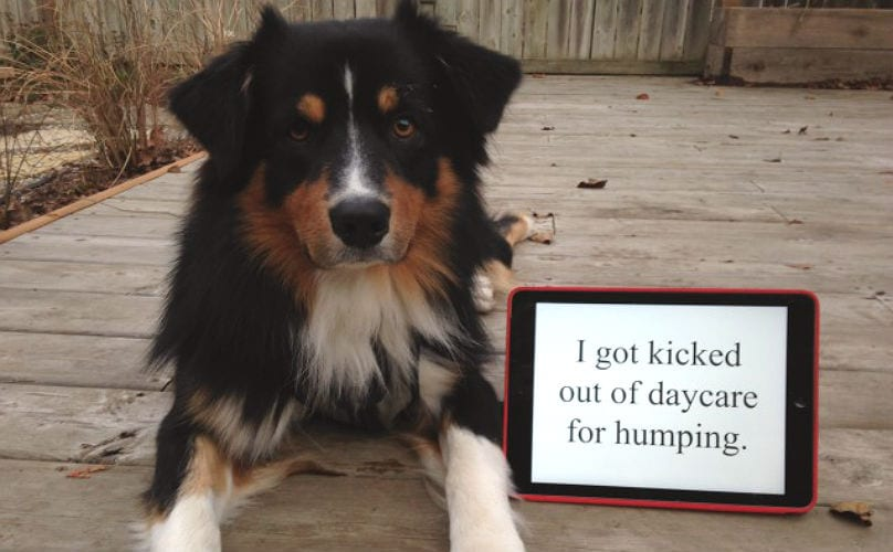 5 Reasons Dogs Hump That Have Nothing To Do With S E X Barkpost