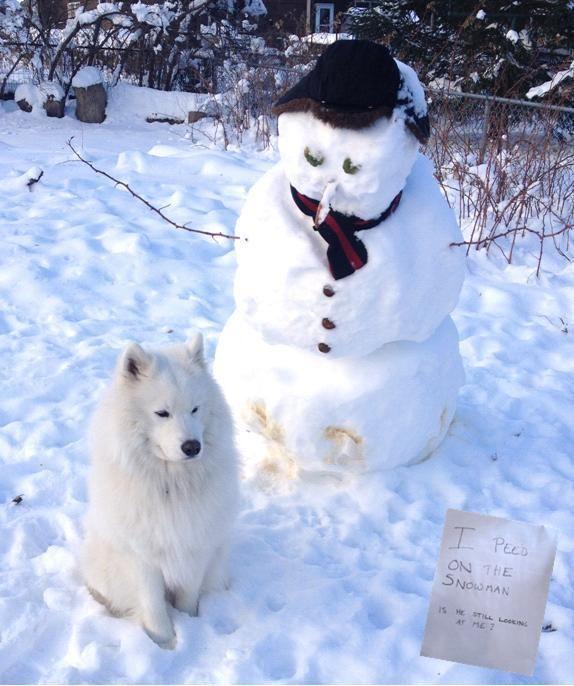 winterdogshame4