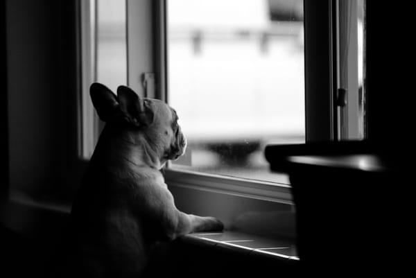 sad dog waiting window