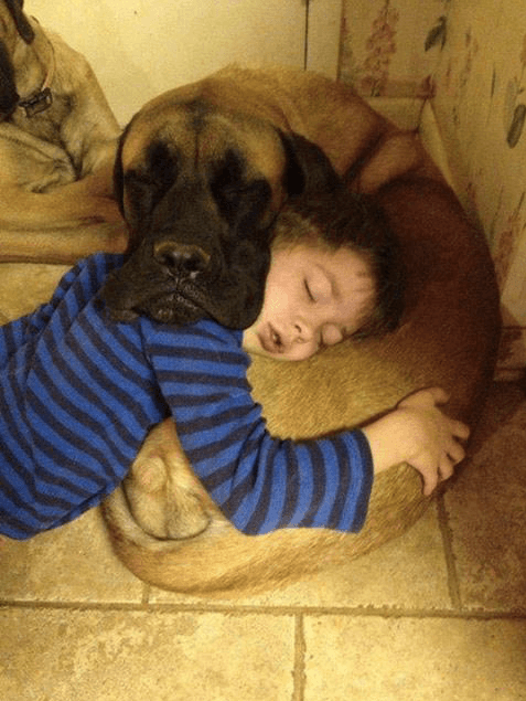 9 Realities Of Sharing A Bed With Your Dog Barkpost