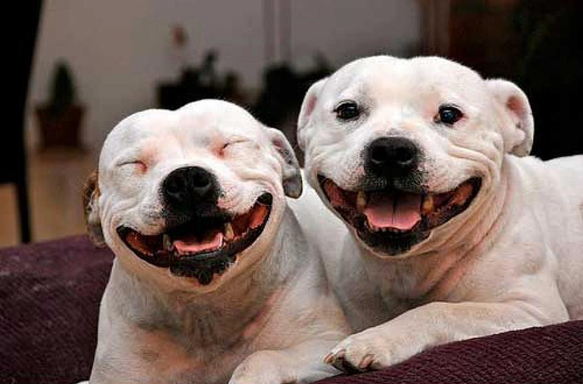 13 Smiling Pitties That Are Ecstatic This Town Lifted A Ban On Them