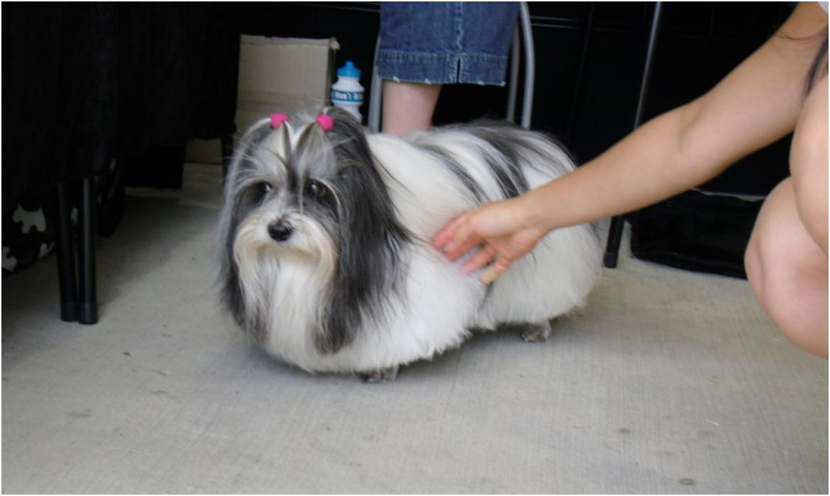 19 Dogs That Should Fire Their Hairdressers Pronto Barkpost