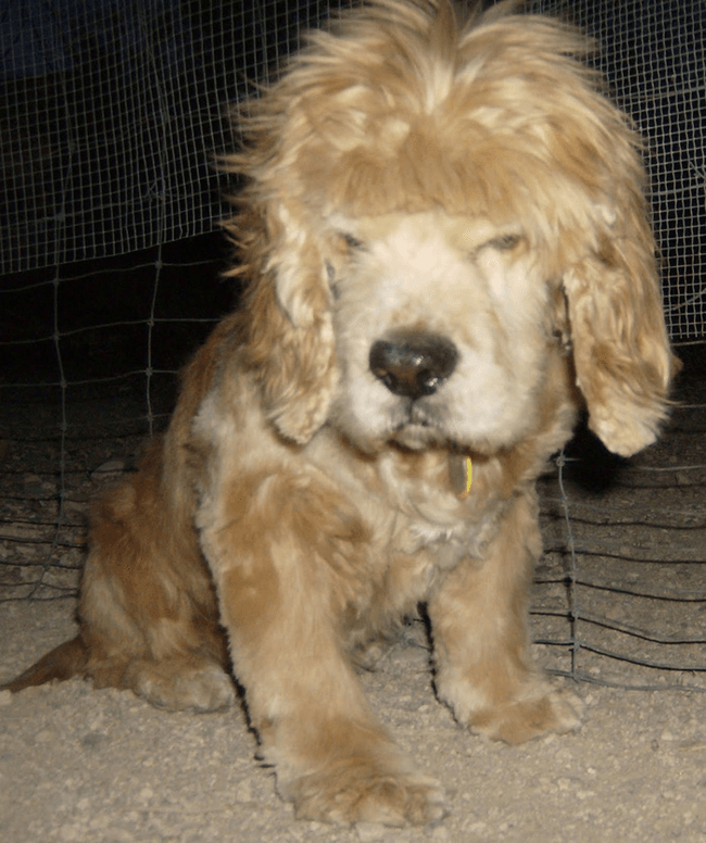 Dogs-Can-Have-Bangs-too