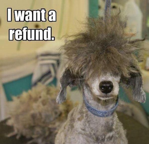 Worst-Dog-Haircuts