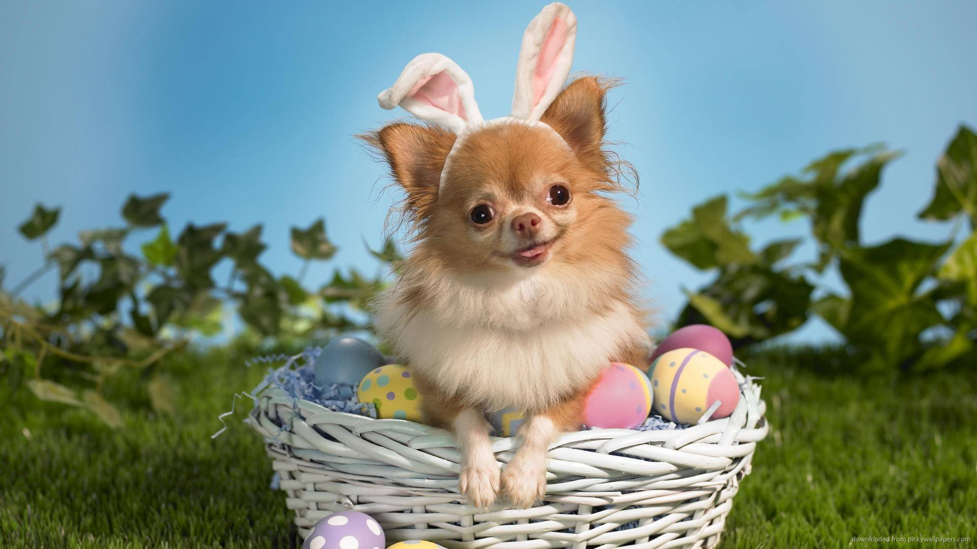 15 Dogs Who Think Theyu0027re The Easter Bunny