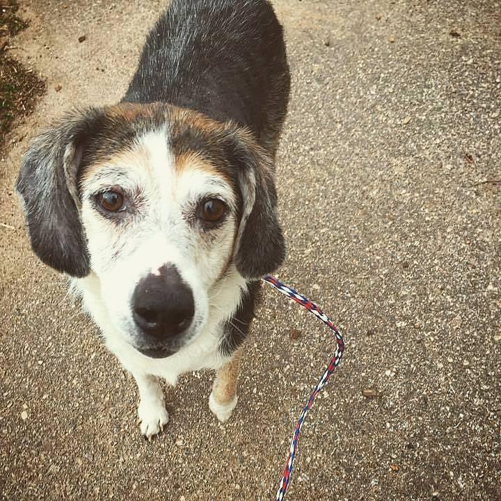 elsie_ariana-grande-adopting-dogs