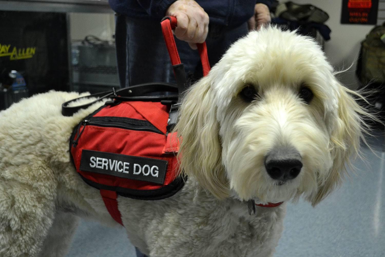 molly the service dog