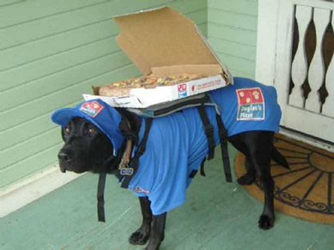 Protected: 9 Ex-Delivery Dogs Who Are Hilariously Handling Unemployment