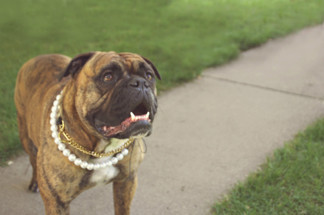 Dog of Honor Pearl Necklace 2