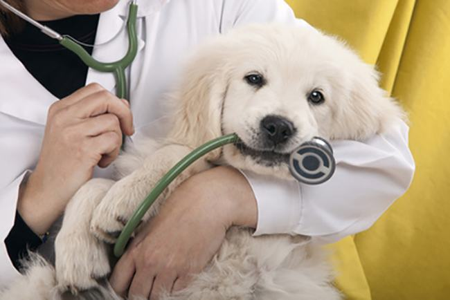 What All Dog Owners Need To Know About The Latest Dog Flu Outbreak