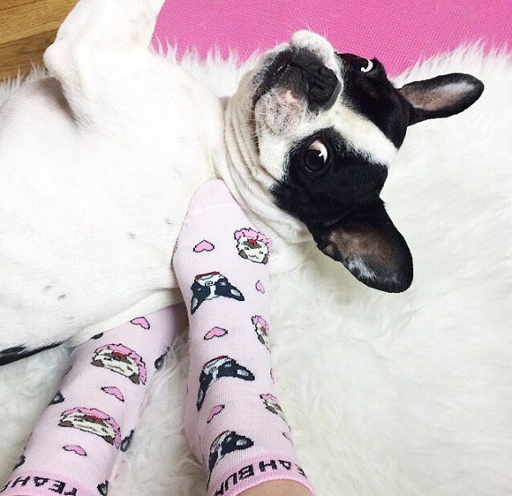 Frenchie Pup Socks