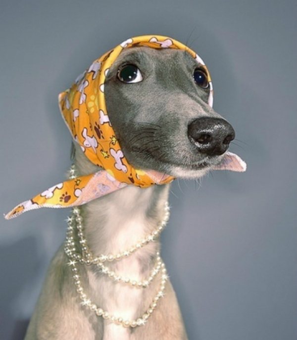 l-Dog-in-pearls-and-head-scarf