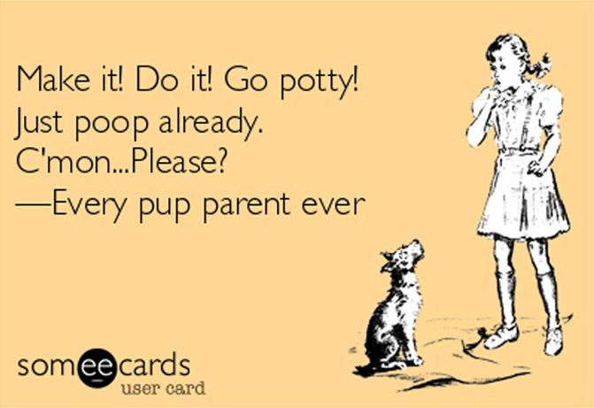 -make-it-do-it-go-potty-just-poop-already-cmonplease-every-pup-parent-ever-9f8e9 copy