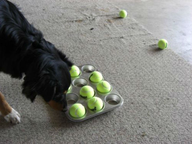 12 Rainy Day Entertainment Ideas To Keep Your Dog Busy Barkpost