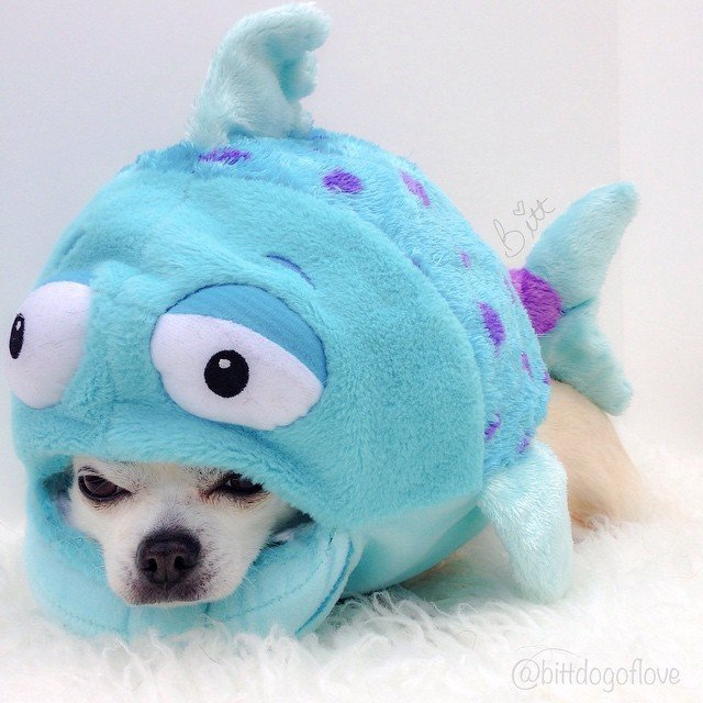 11 pups whose invites to the costume party were lost in for Is fish bad for dogs