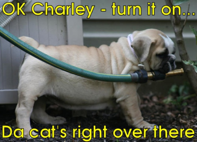 Dog-Turn-On-The-Firefighter-Water-To-Hit-The-Cat-Very-Funny