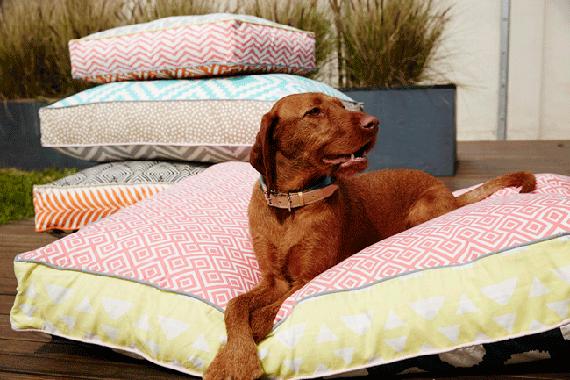 Pooccio Dog Beds
