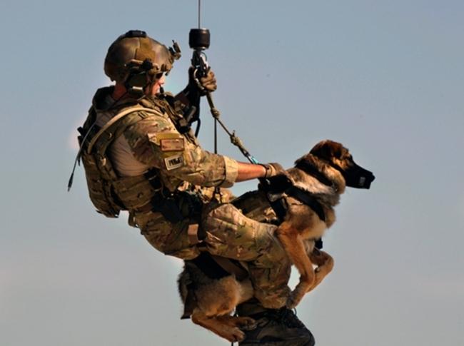 Dog Training Equipment South Africa