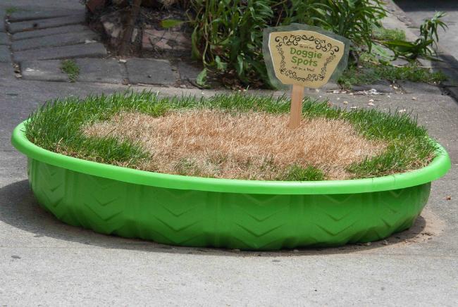 brooklyn_dog_grass__2