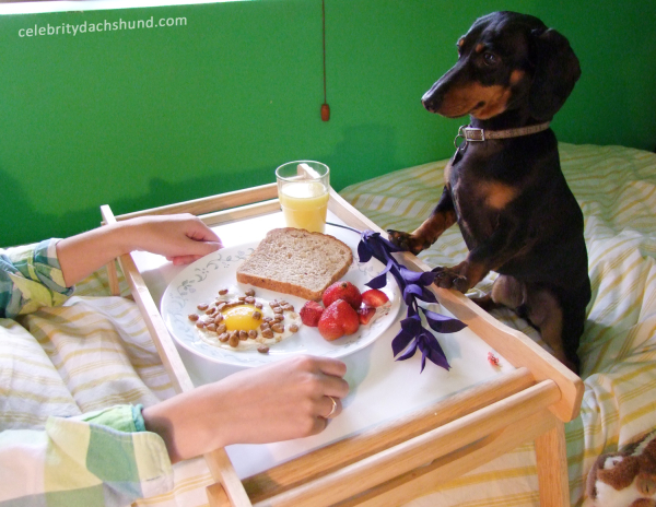 5 Recipes To Fulfill Your Pup's Dream Of Having Brunch With You