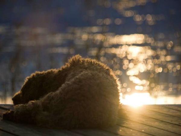 dog sunning 8 new
