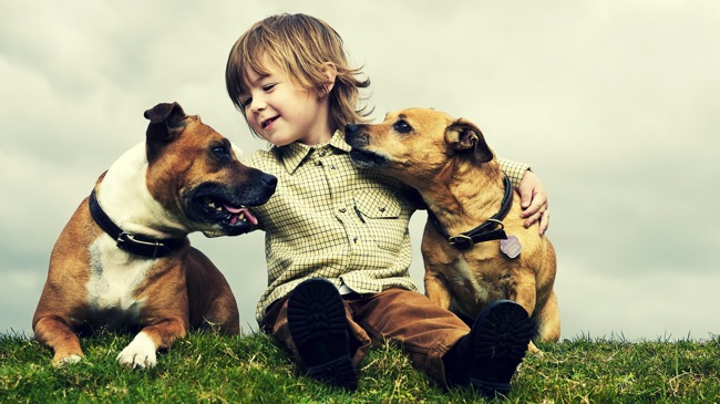 dogs-and-kid