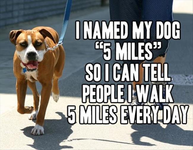 funny-dog-names
