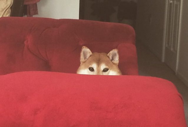 humans cant see me