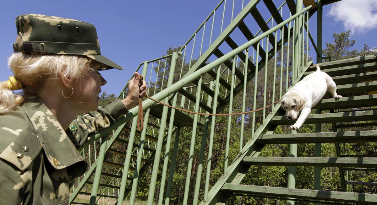 A Belarussian military instructor trains a labrador puppy at a frontier guards' cynology centre near the town of Smorgon