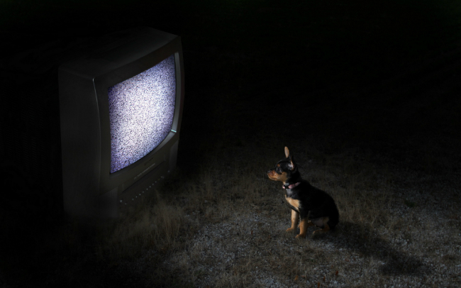 Can-dogs-see-in-the-dark