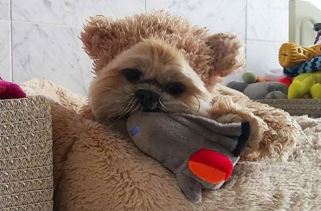 munchkin teddy bear space camp