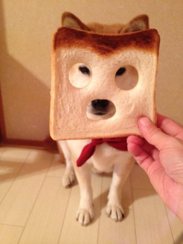 shiba bread