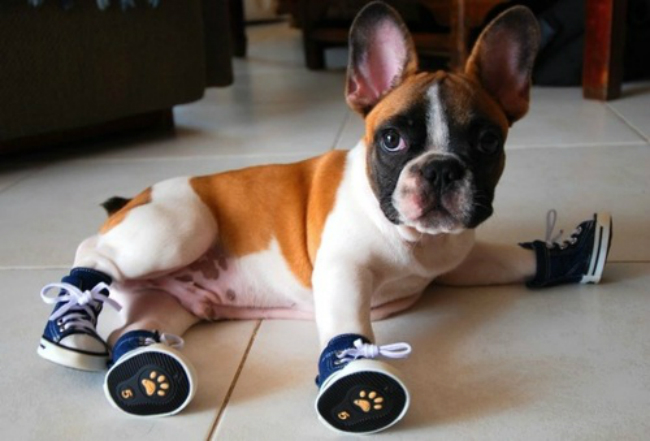 All-About-Dog-Shoes