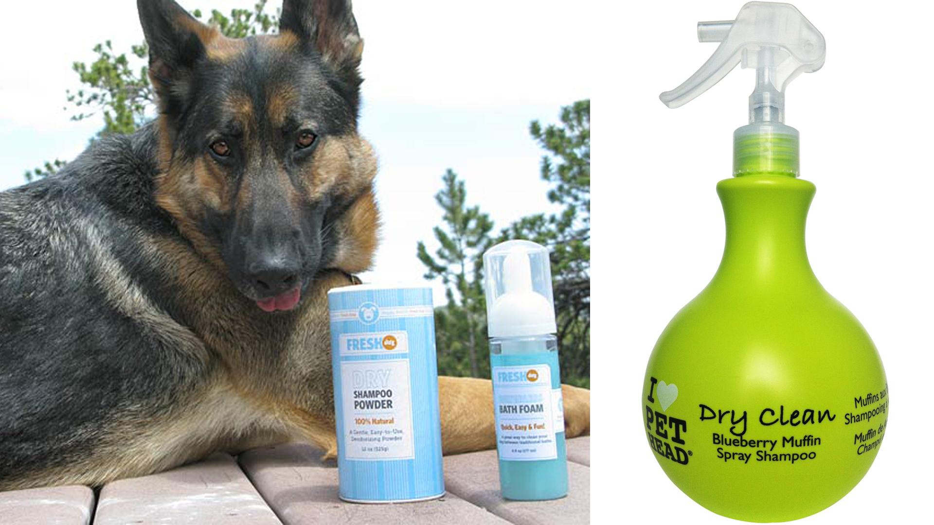 Can You Give A Dog A Bath With Regular Shampoo