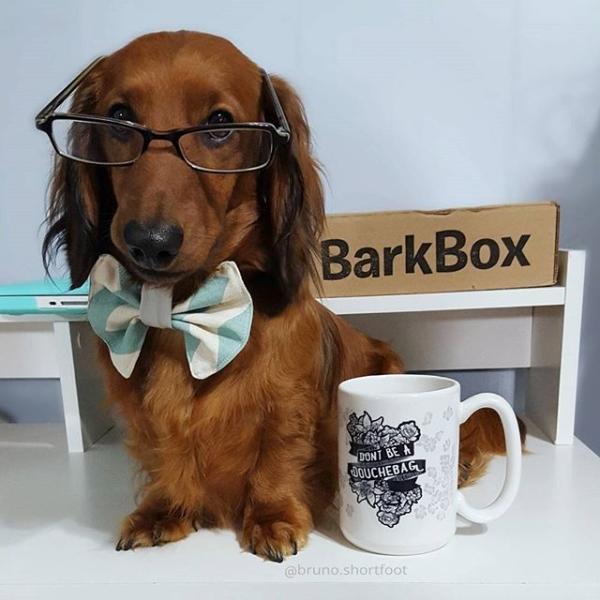 barkbox-whatsinside1