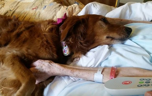 Therapy Dog Gently Comforts Hospice Patient While They