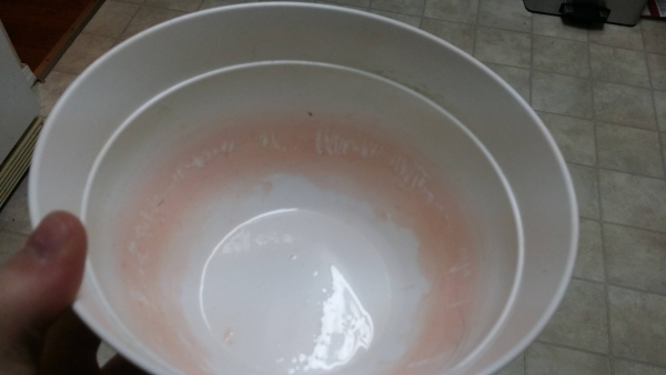 A Clean Water Bowl Is More Important For Your Dog S Health