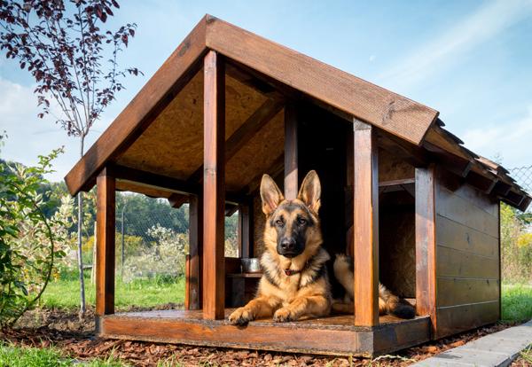 pot-dog-house-2 copy